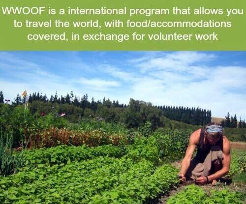 Volunteer Around the world free
