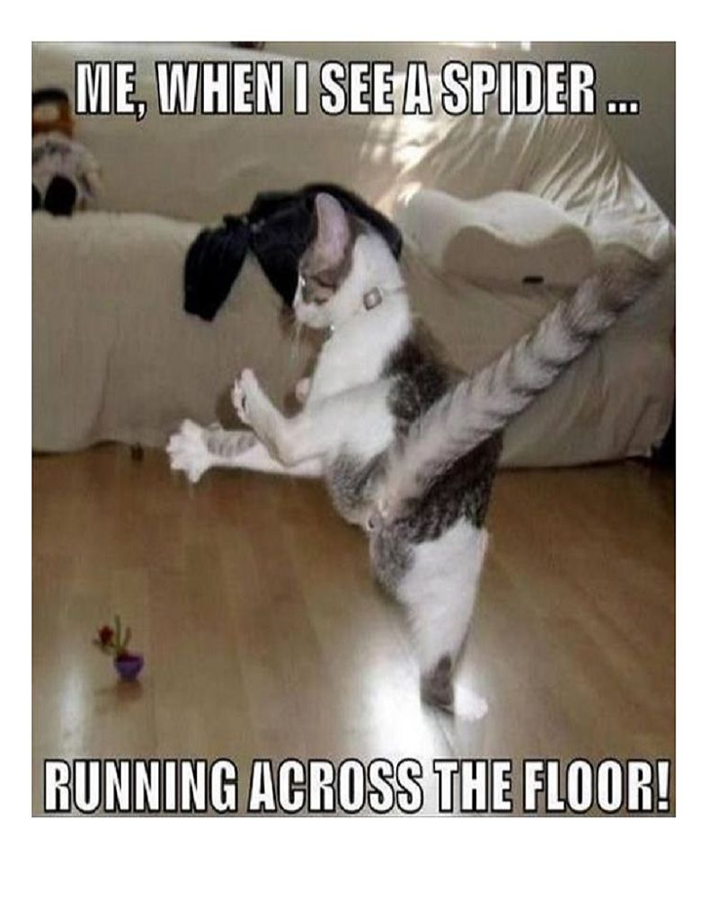 25 Most Hilarious Memes About Everyday Life That S So True Photos Crazy Cats Funny Animals Funny Cat Pictures