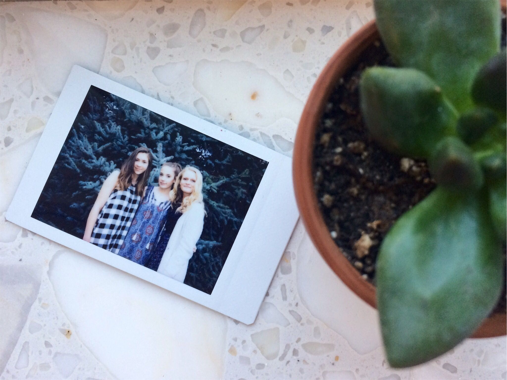 polaroid & plant
