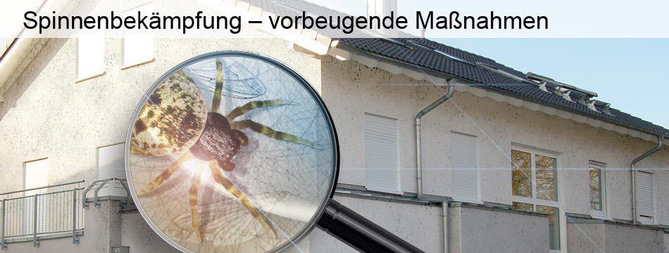 Spinnenbekampfung Vorbeugende Massnahmen Unternehmungen