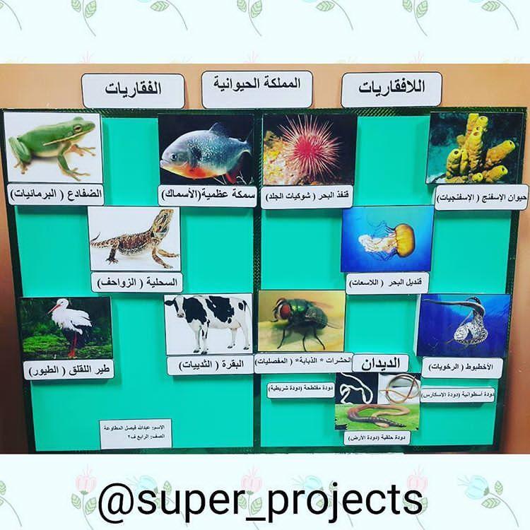 وسيلة المملكة الحيوانيه الفقاريات اللافقاريات للصف الرابع الابتدائي الفقاريات اللافقاريات الصف الرابع الا National Day Saudi Crafts For Kids Classroom Door