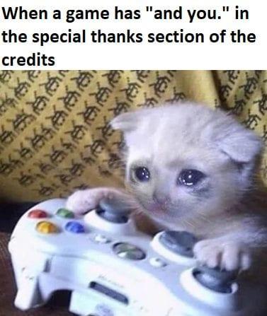 Pin by Tom Bradford on Crying Cat Memes Funny memes