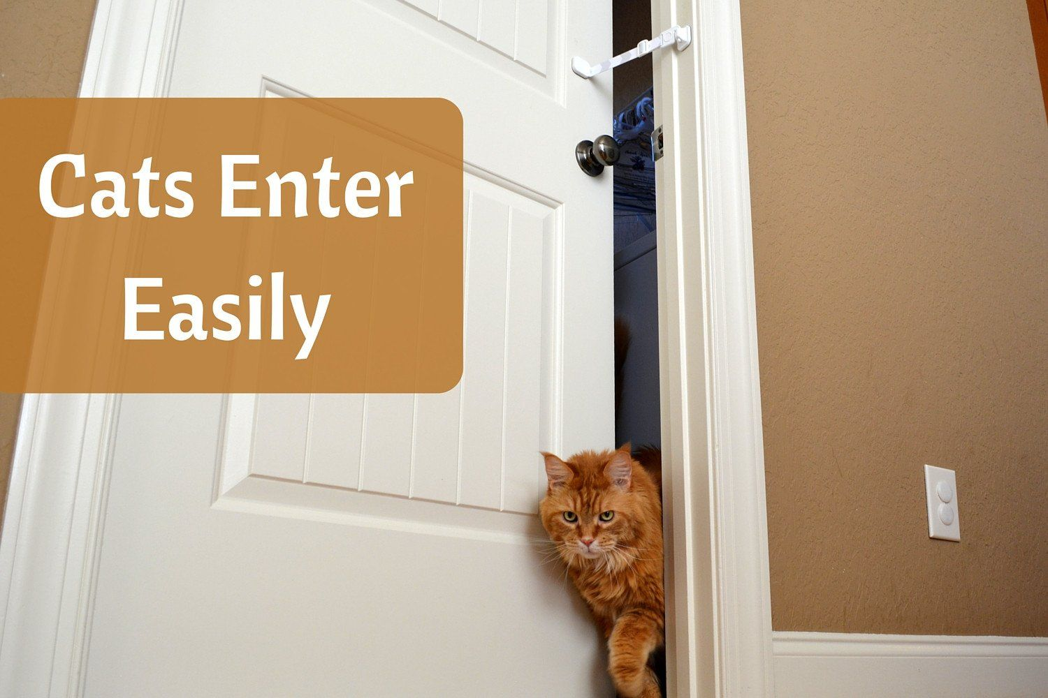Best top entry litter box alternative to keep dogs out