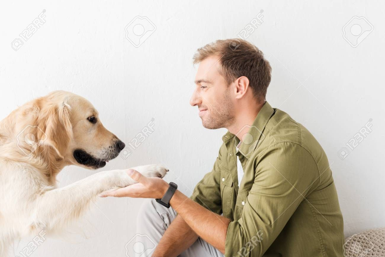 Golden Retriever Dog Giving Paw To Happy Man Against White Wall Aff Dog Giving Golden Retriever P Dogs Golden Retriever Golden Retriever Retriever