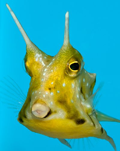 Oddballs For The Marine Aquarium Full Article Saltwater Reef