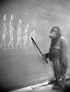 evolution | gorilla | blackboard | photograph | link : post : releasingreligion.blogspot.com | ram2013