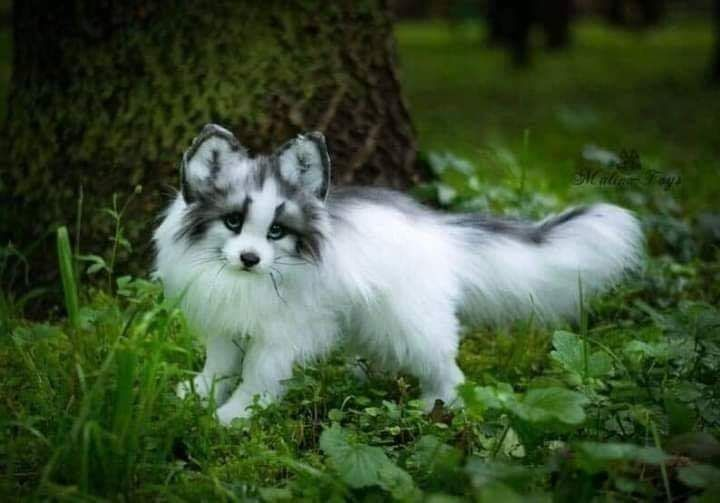 Adorable canadian marble fox pup in 2020 animals cute