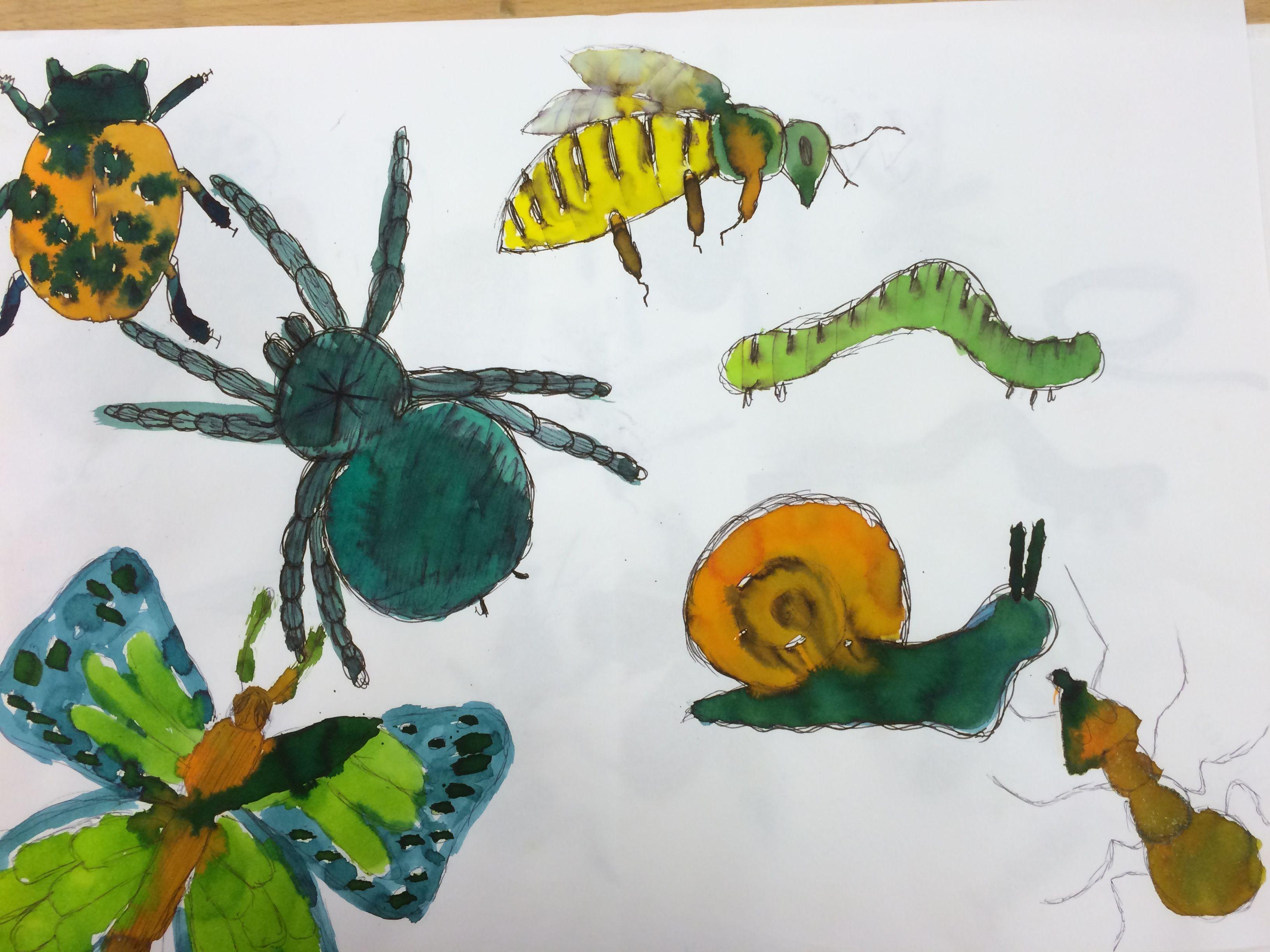 Leerjaar 3: insecten met ecoline