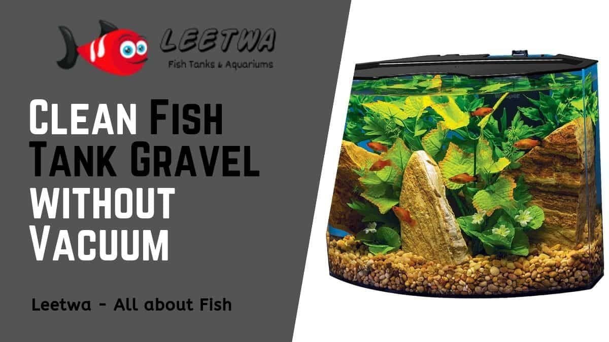 How to clean fish tank gravel without a vaccum Fish tank