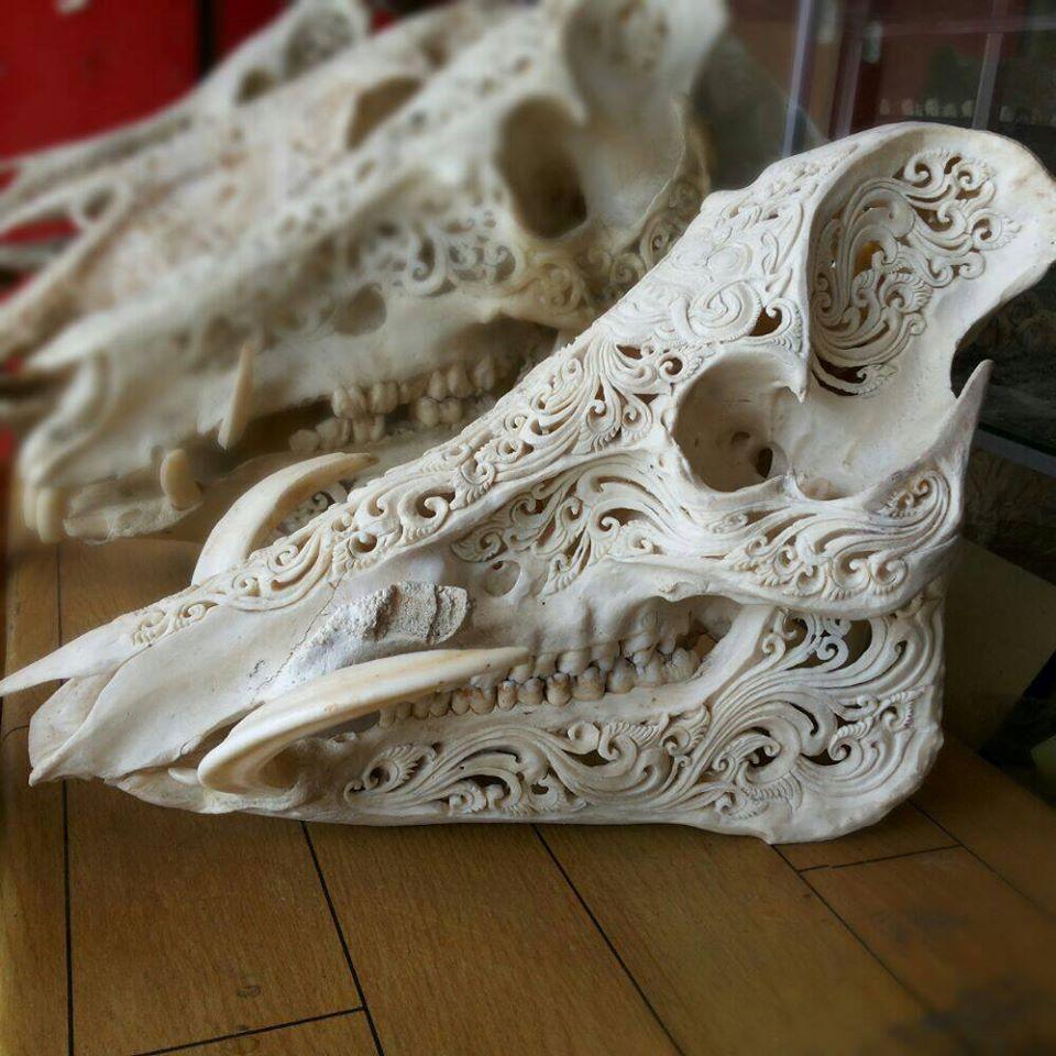Carved hog skull by renaba at bali organic arts skulls