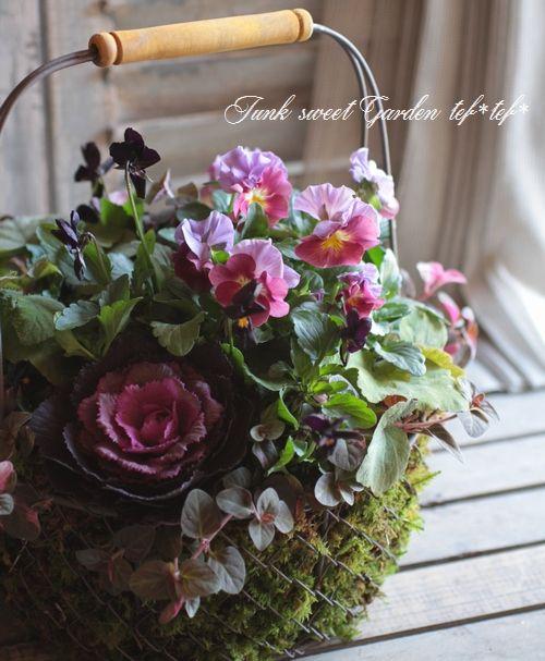 <i>Viola×wittrockiana </i><BR><BR>みもと園芸さんのビオラ<BR>『パッションウェーブ』MIX | 花 | | Junk sweet Garden tef*tef*