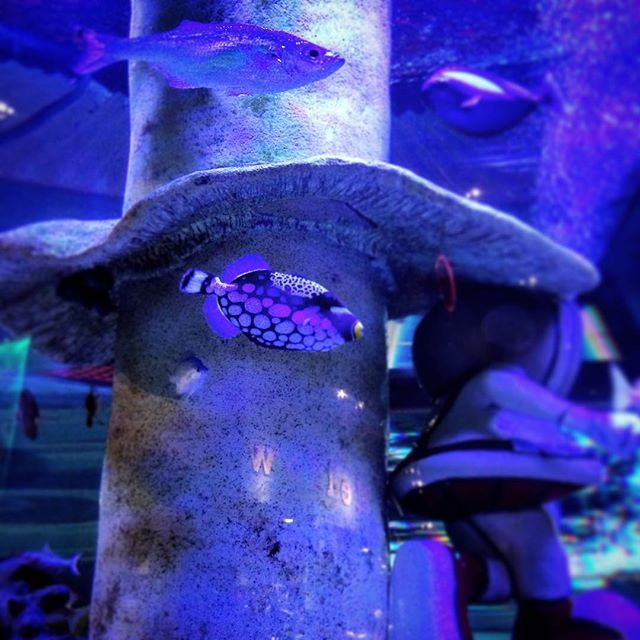 Fish tank as dinner entertainment. #usa #aquarium #fish
