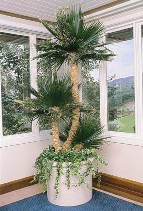 European Fan Palm, Preserved Foliage, Artificial plant, fake plants ...