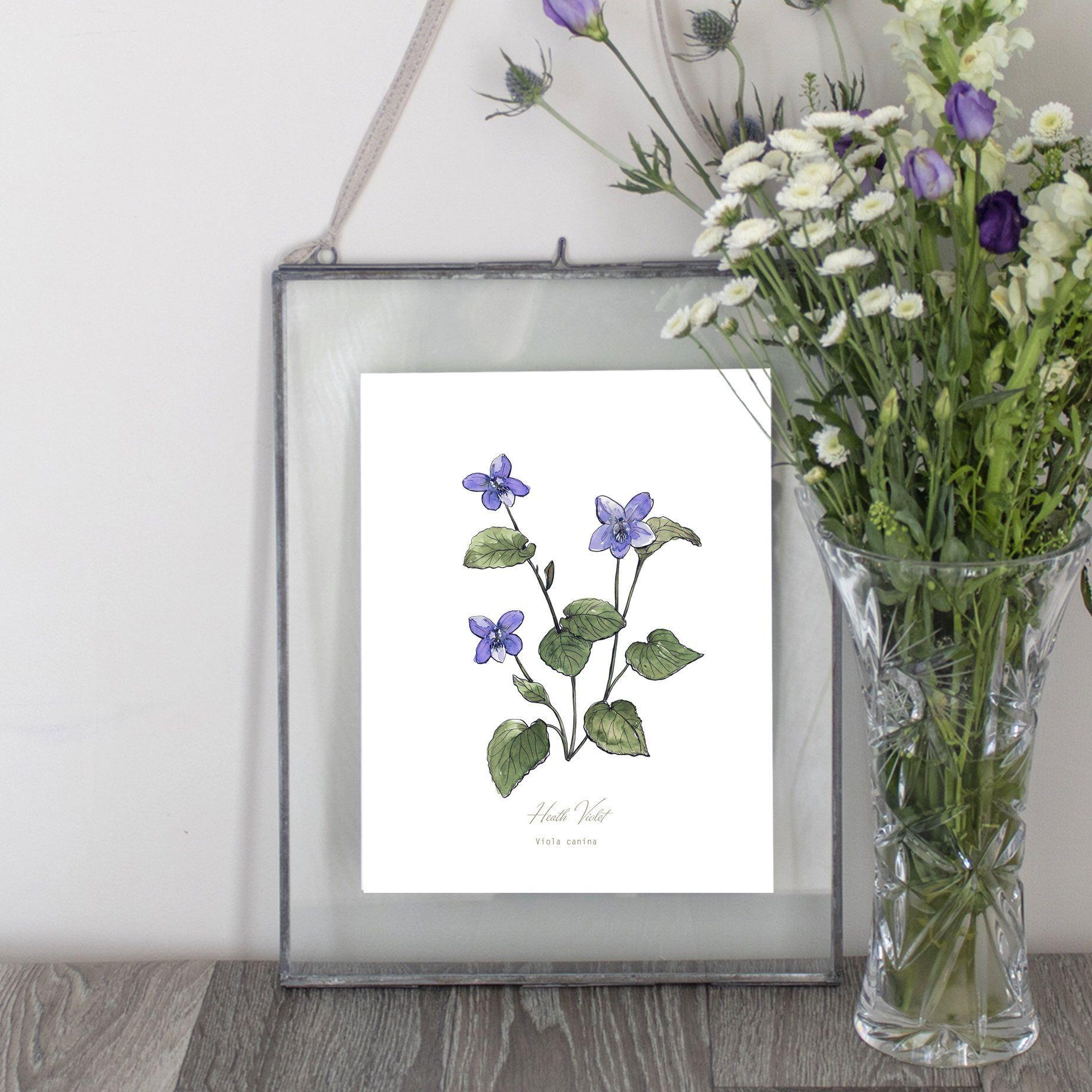 Heath Violet Purple Flower Illustration Botanical Wild Flower Art Print Orkney Wildflower Botanical Prints Watercolor Plants Watercolor Flowers