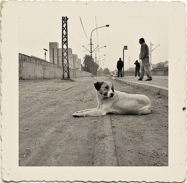 Postcard | Street Dog Photography |