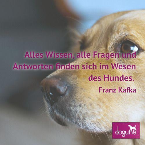 Alles Wissen Alle Fragen Und Antworten Finden Sich Im Wesen Des Hundes Franz Kafka Hund Hunde Dog Dogs Dogsofinstagram Hunde Frage Antwort Hundebilder