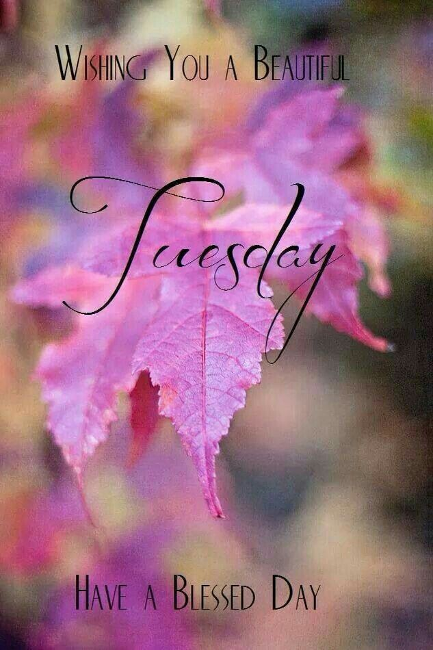Have A Blessed Tuesday.