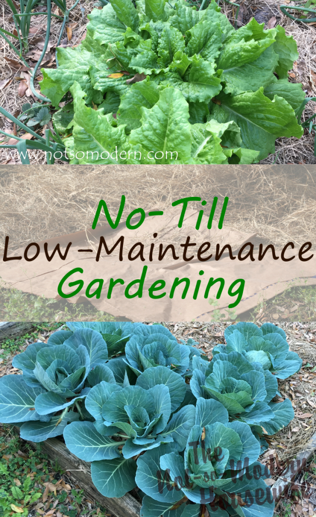 Low-Maintenance No-Till Gardening