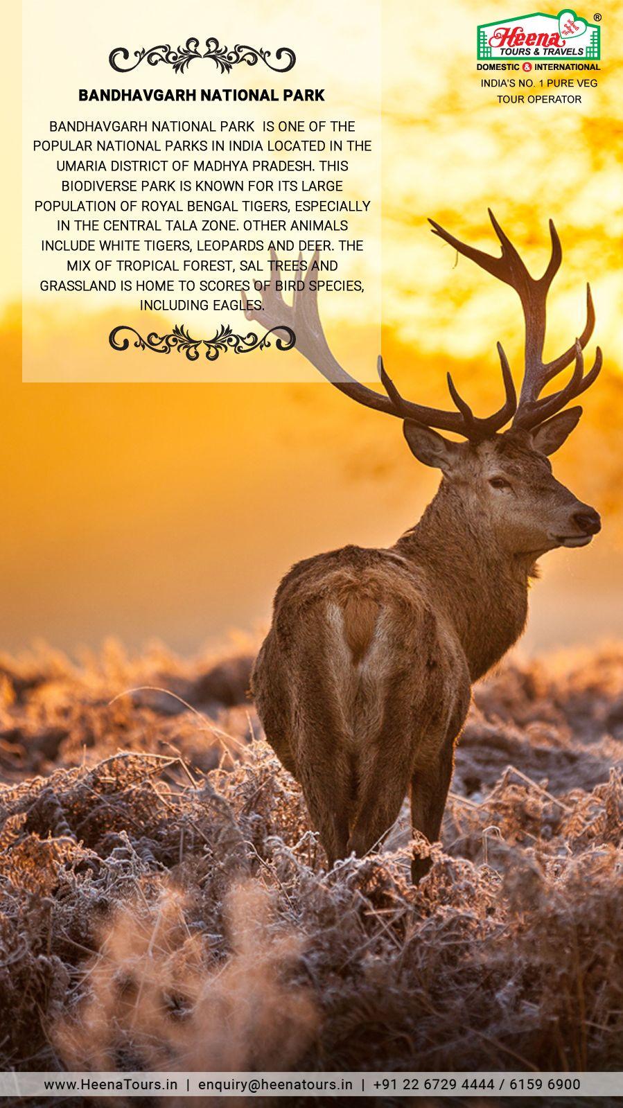 Bandhavgarh national park madhya pradesh bandhavgarh