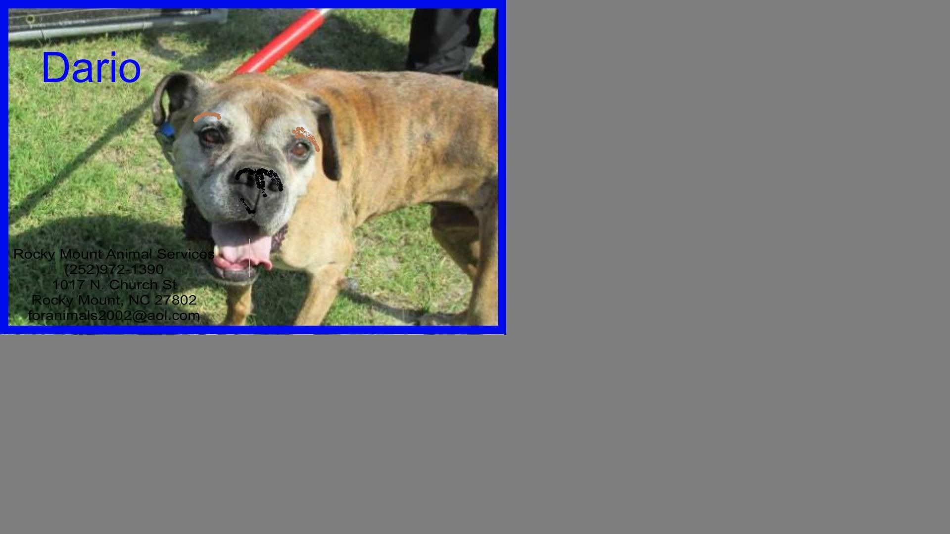 Adopt Dario on Dog adoption