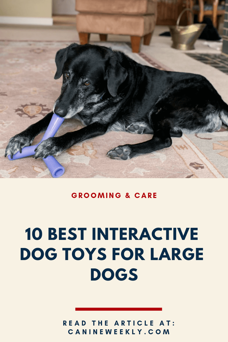 Interactive Dog Toys 10 Best Interactive Dog Toys (Puzzle Toys) for 2019 | Canine Weekly