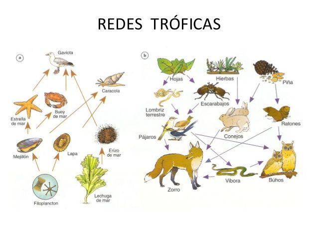 Resultado De Imagen Para Cadenas Y Redes Troficas Red Trofica Lechuga De Mar Suma De Fracciones