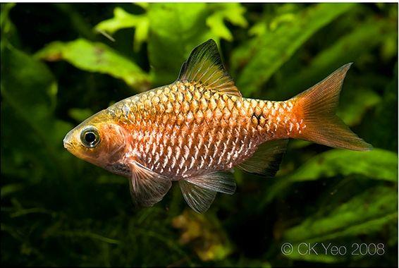 Pin By My Info On Tropical Fish Pinterest Aquarium Fish