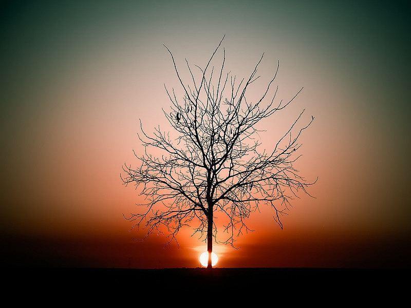 #tree_brilliance #tree_magic #landscape #landscapes #landscape_lovers #sunset #sunshine #sunsets #naturelover #nature #nature_shooters