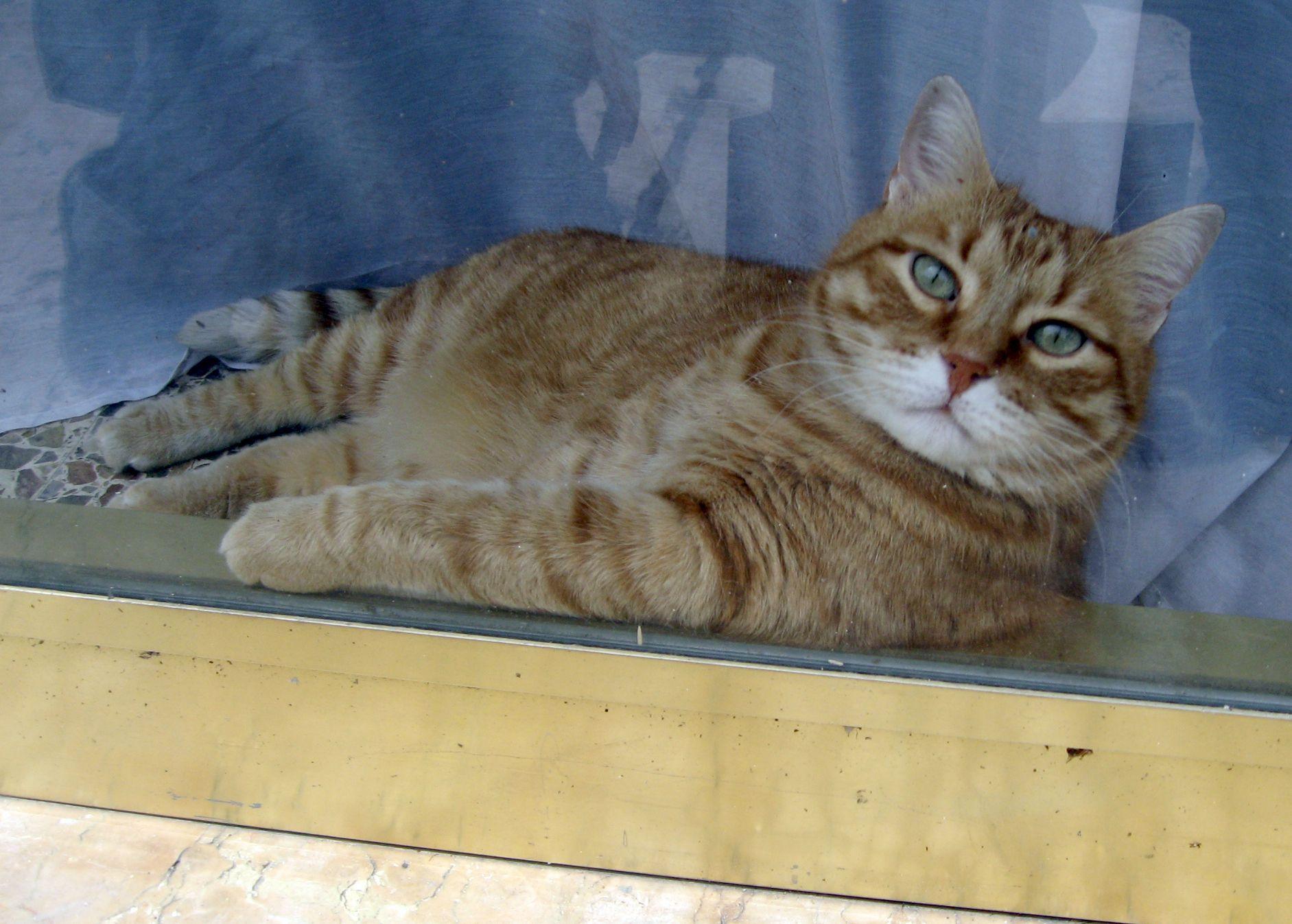 gatto in vetrina...