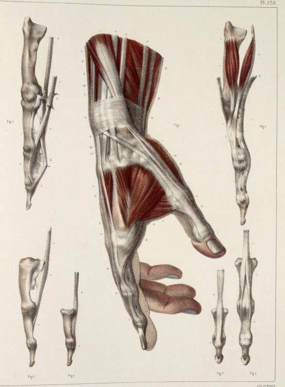 Pin By Zhenhe On In 2019 Pinterest Anatomy Anatomy