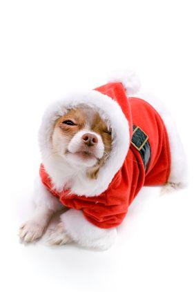 Happy Christmas - Outdoor Science - AGU Blogosphere