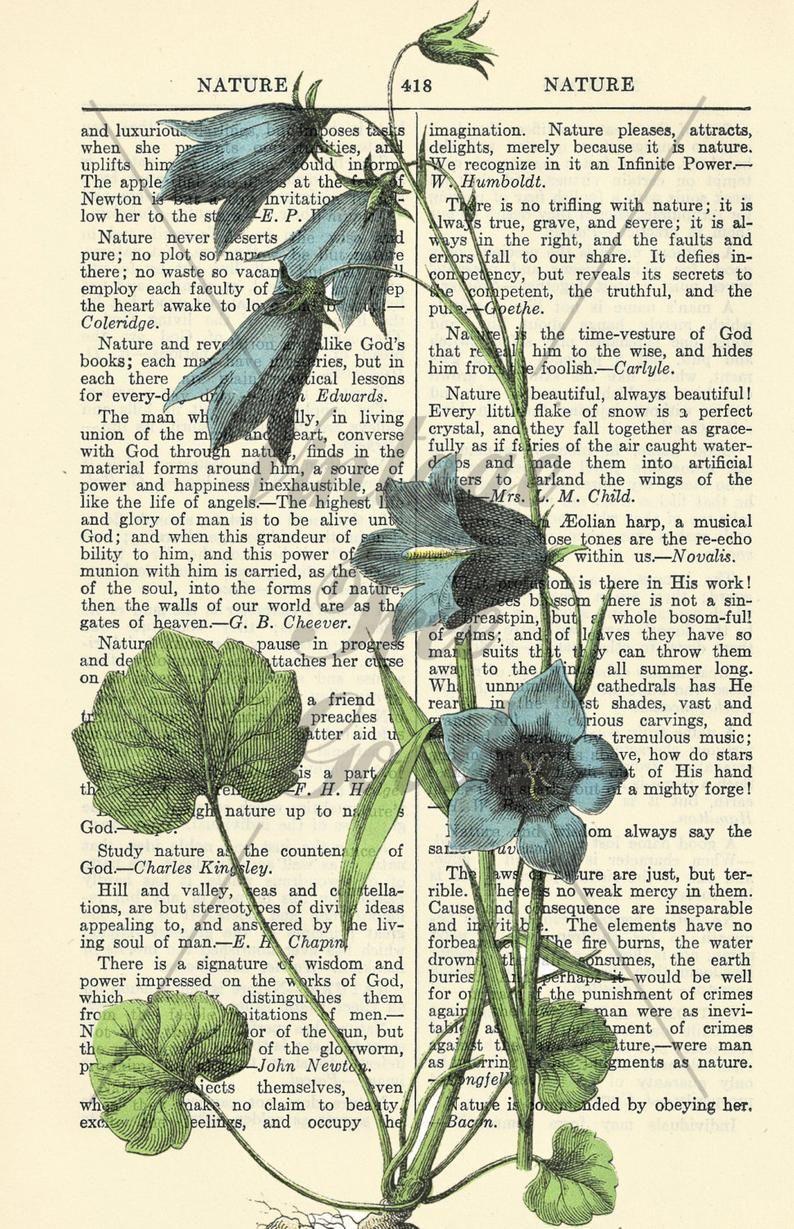 Vintage Book Page Download - Nature 2 - Scrapbook Collage Art Print