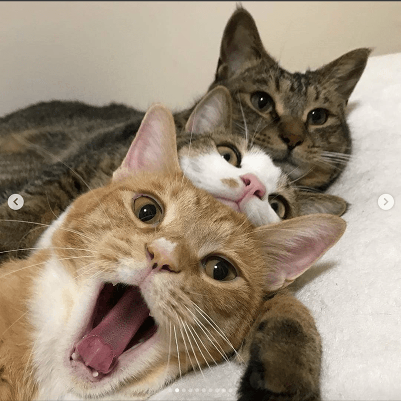 These 3 Adorable Cats Not Only Love To Nap Together But Take Selfies - I Can Has Cheezburger?