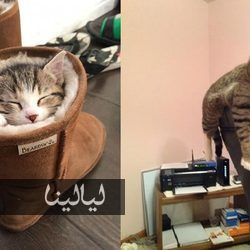 Pin By Fify Abuu Dief On ممتاز In 2020 Animals Cats Photo