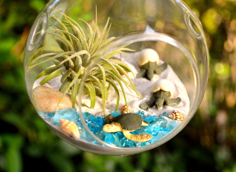 Sea turtle terrarium kit small air plant terrarium kit