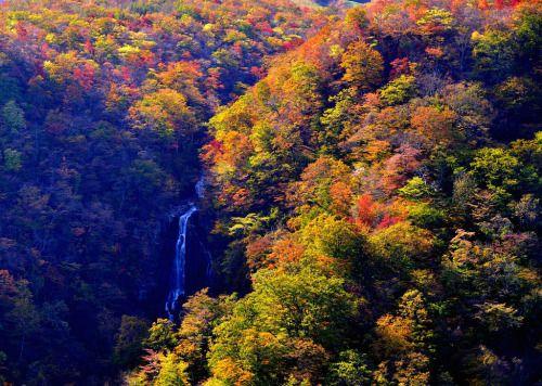 Waterfall by Giovanni88Ant Zao Yamagata pref. 滝遠望 エコーラインより遠方を望んだここはまだ紅葉が盛んhttp://flic.kr/p/P6DAvi