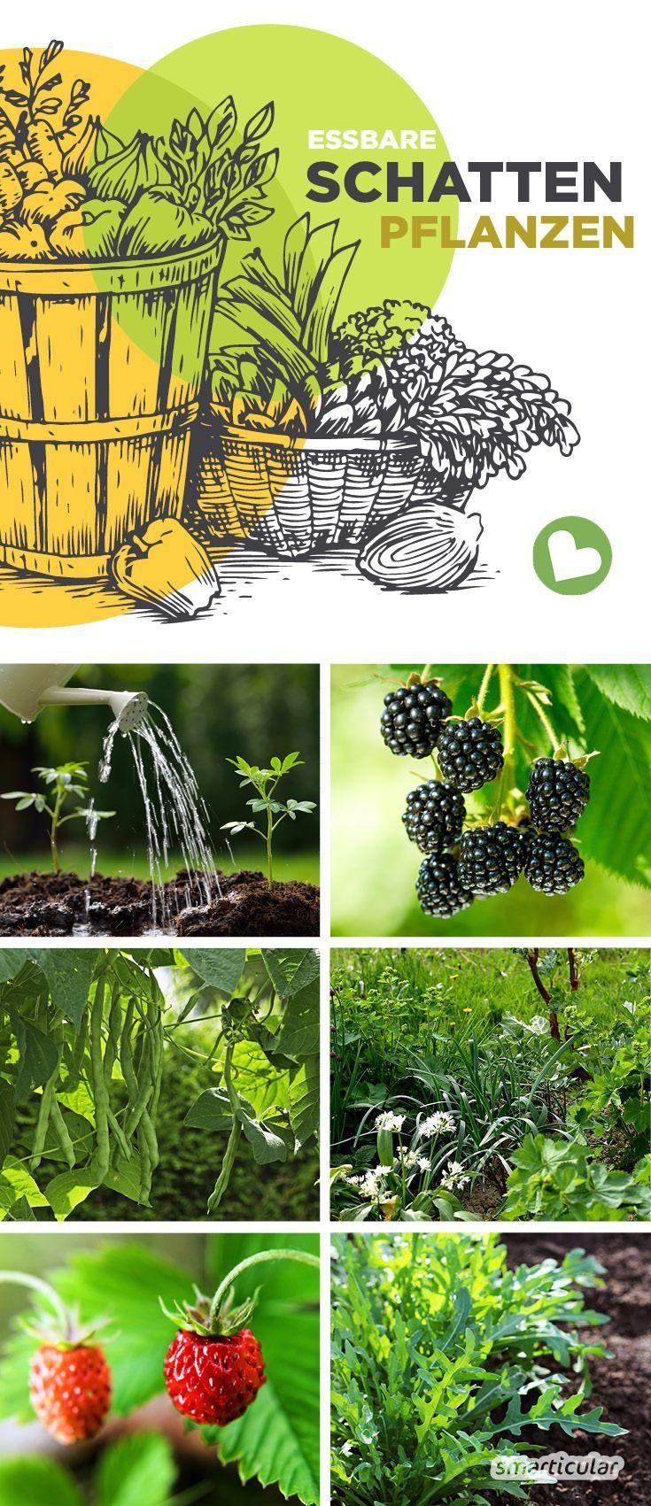 Essbare Pflanzen, die im Schatten wachsen