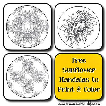 Sunflower Mandala Coloring PagesFree Printable Flower Pages Of Mandalas Different Floral
