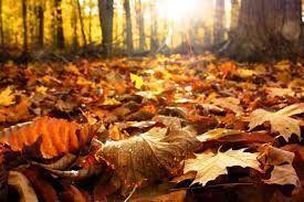 Resultado de imagen de bienvenido otoño #bienvenidootoño Resultado de imagen de bienvenido otoño #bienvenidootoño Resultado de imagen de bienvenido otoño #bienvenidootoño Resultado de imagen de bienvenido otoño #bienvenidootoño Resultado de imagen de bienvenido otoño #bienvenidootoño Resultado de imagen de bienvenido otoño #bienvenidootoño Resultado de imagen de bienvenido otoño #bienvenidootoño Resultado de imagen de bienvenido otoño #bienvenidootoño