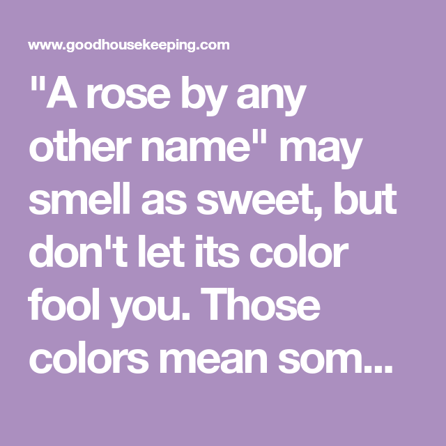 Coral Roses are The Perfect Way to Celebrate Your First Valentine's Day Together | Rose color ...