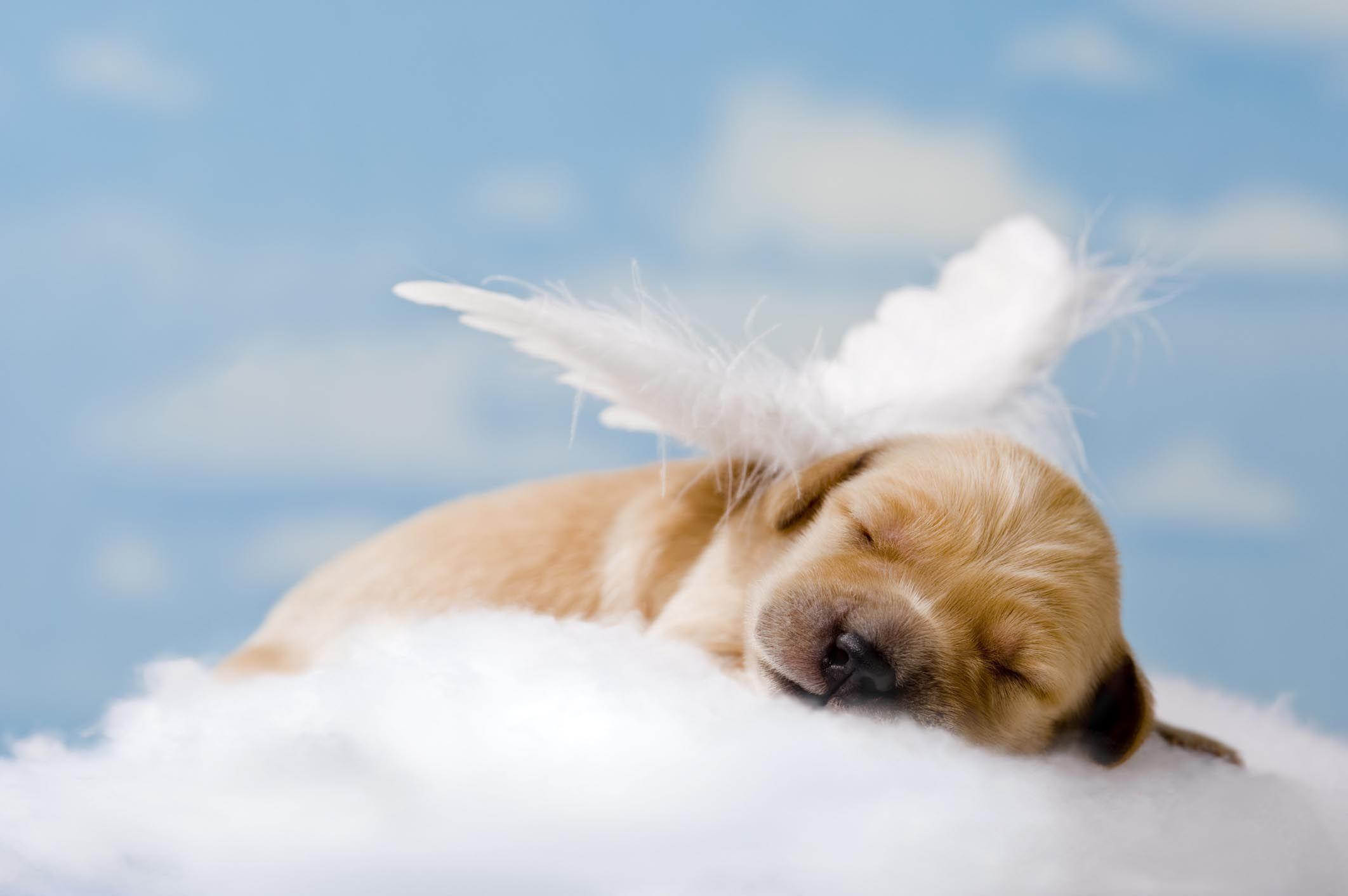 Urns And Caskets Pet Cremations In Amarillo Texas Losing A