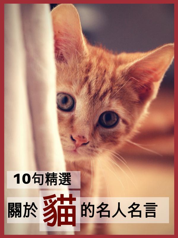 名言簿Miinote:10句精選關於貓的名人名言 10 Chinese Interesting Quotes on