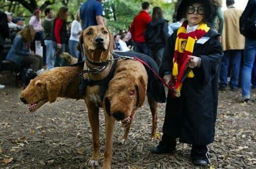 Potter got a pet - CAABOH -