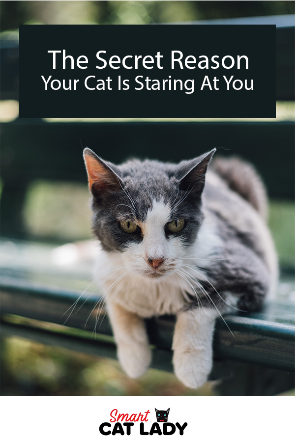Does your cat stare into your eyes creepily? Here is the secret reason your cat stares at you all the time even while you sleep.    #smartcatlady #cat #kitty #kitten #stare #staring #catproblems #catowner #pet #secret