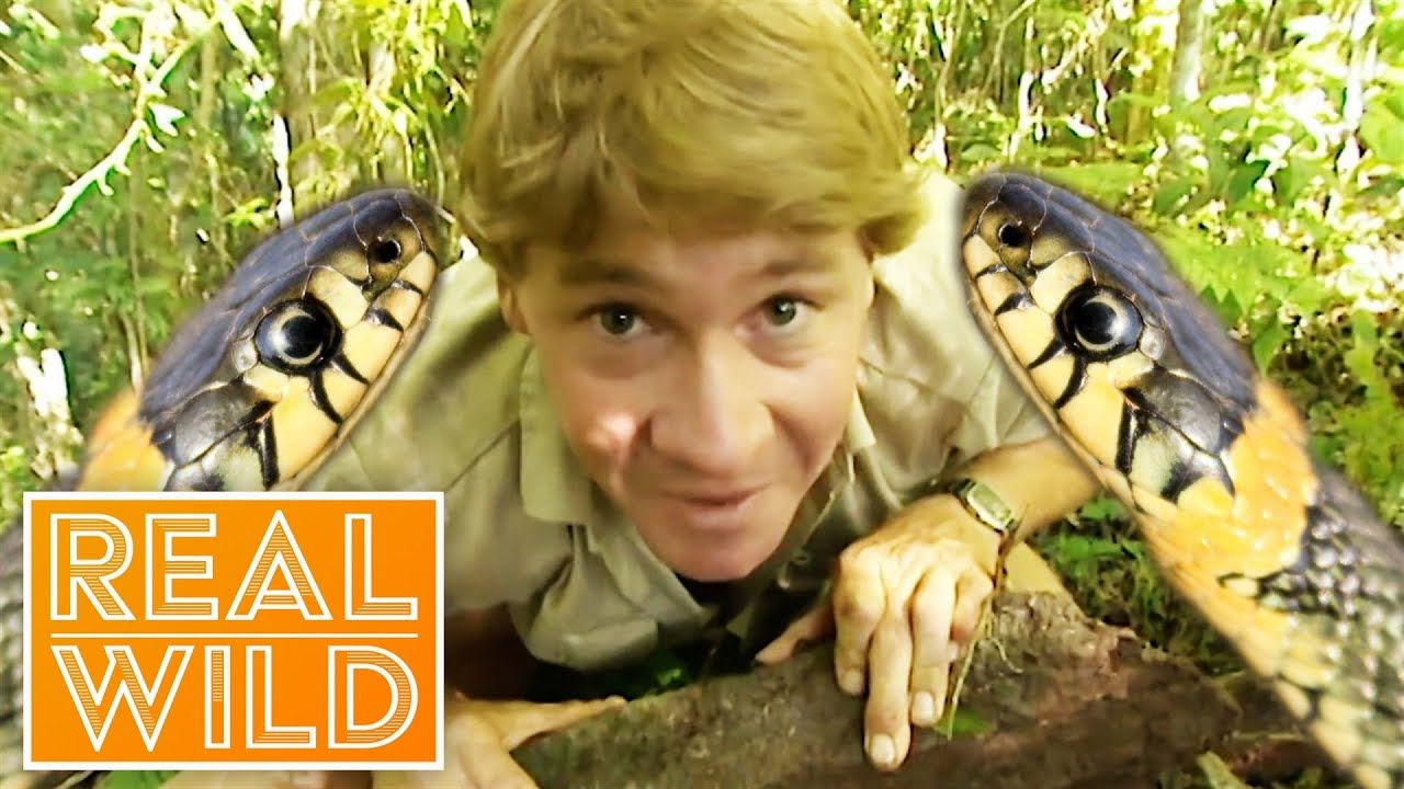The Ten Deadliest Snakes In The World With Steve Irwin