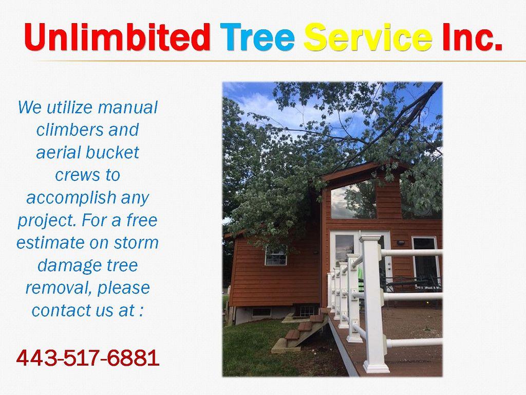 expert tree service rochester ny
