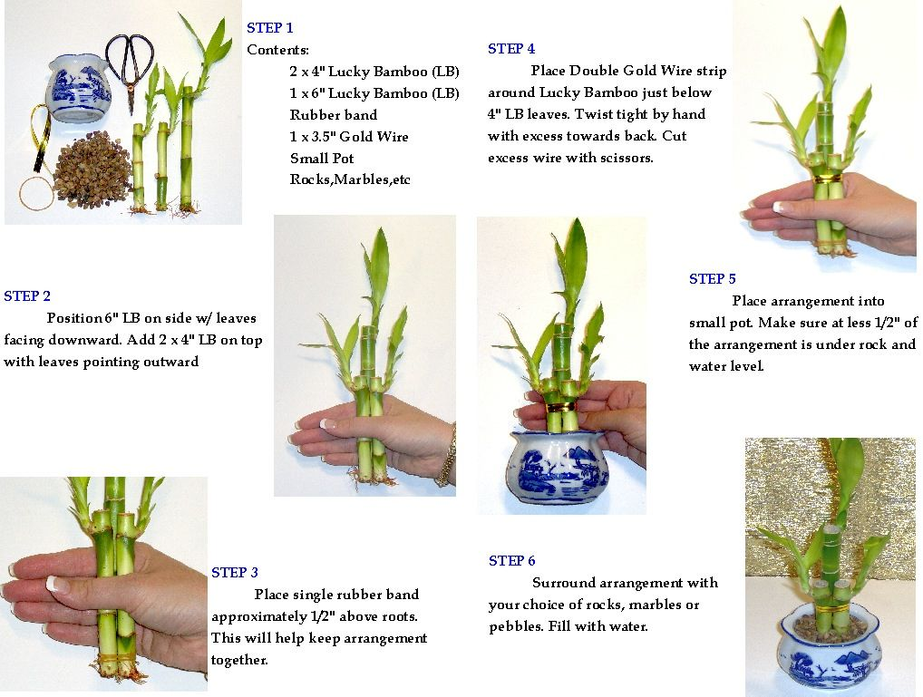 Pin By Ritu On Indoor Plants Lucky Bamboo Plants Lucky 400 x 300