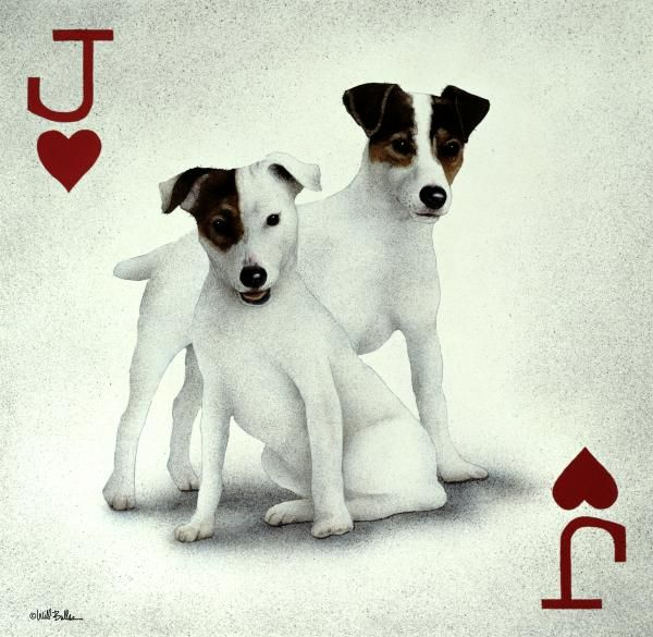 A Pair Of Jacks By Will Bullas Jack Russell Dogs Jack Of