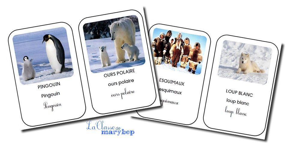 Connu Référentiel sur les animaux polaires … | Pinteres… VT13