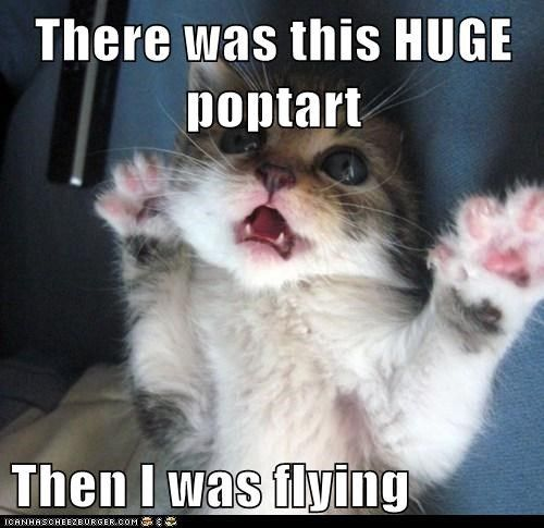 Lolcats Cheeseburger | Lolcats: There was this HUGE poptart